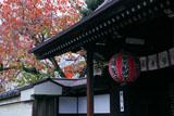 雨宝院 御衣黄の桜紅葉