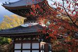 本法寺 桜紅葉と多宝塔