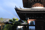 本法寺 多宝塔と虹空