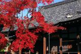 妙顕寺 紅葉と鬼子母神堂