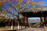 妙覚寺 桜紅葉と大門