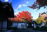 妙覚寺 玄関と紅葉