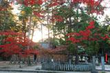 今宮神社 夕照と紅葉