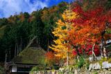 美山かやぶきの里 普明寺の紅葉