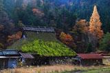 京都広河原 尾花町の茅葺き民家と枯芒