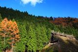 京都広河原 尾花町の茅葺き民家と紅葉