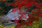 京都十輪寺 紅葉越しの本堂