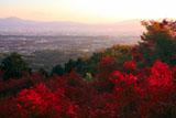 三鈷寺の紅葉
