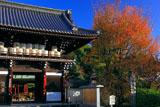 梅宮大社 楼門と山桜の紅葉