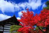 南禅寺金地院 紅葉と庫裏