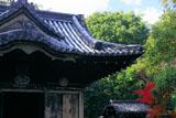 南禅寺金地院 東照宮拝殿と紅葉
