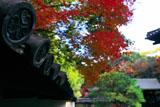 南禅寺金地院 三葉葵紋瓦当と紅葉