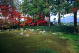 円通寺 紅葉の庭園