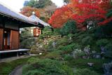 霊鑑寺 書院と本堂に紅葉