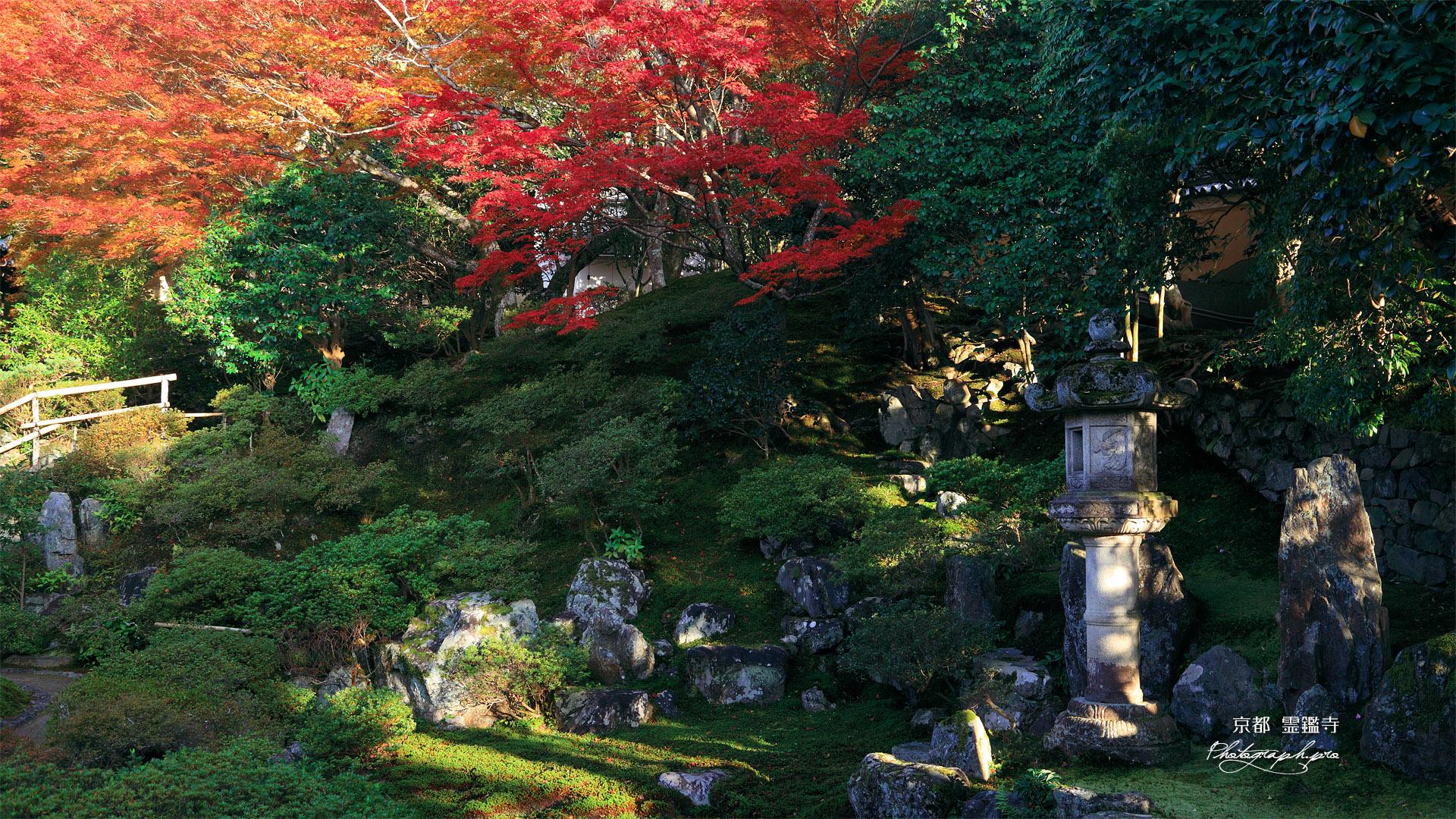 霊鑑寺 書院前庭の紅葉