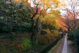 哲学の道 疏水分線と紅葉
