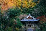 大豊神社 山茶花と紅葉