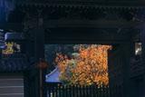 妙法院 門越しの桜紅葉と本堂