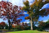 方広寺大仏殿跡緑地の紅葉