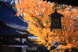 新日吉神宮 吊灯篭と黄葉