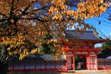 新日吉神宮 さくら紅葉と楼門