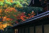 新日吉神宮 桜紅葉と本殿