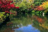 神泉苑 紅葉の法成就池