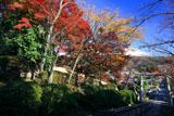 宗忠神社 参道の紅葉