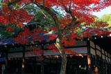 宗忠神社 紅葉と拝殿