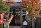 須賀神社 桜紅葉