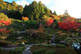 光雲寺 紅葉の池泉回遊式庭園