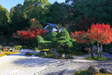 金戒光明寺 紅葉の紫雲の庭