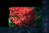 金戒光明寺 石灯籠越しの紅葉