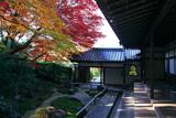 栄摂院 本堂からの三色紅葉