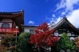 京都達磨寺 紅葉と庫裡