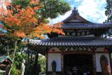 京都達磨寺 紅葉と達磨堂