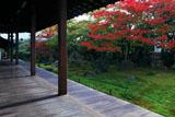 京都達磨寺 本堂からの紅葉の無尽庭