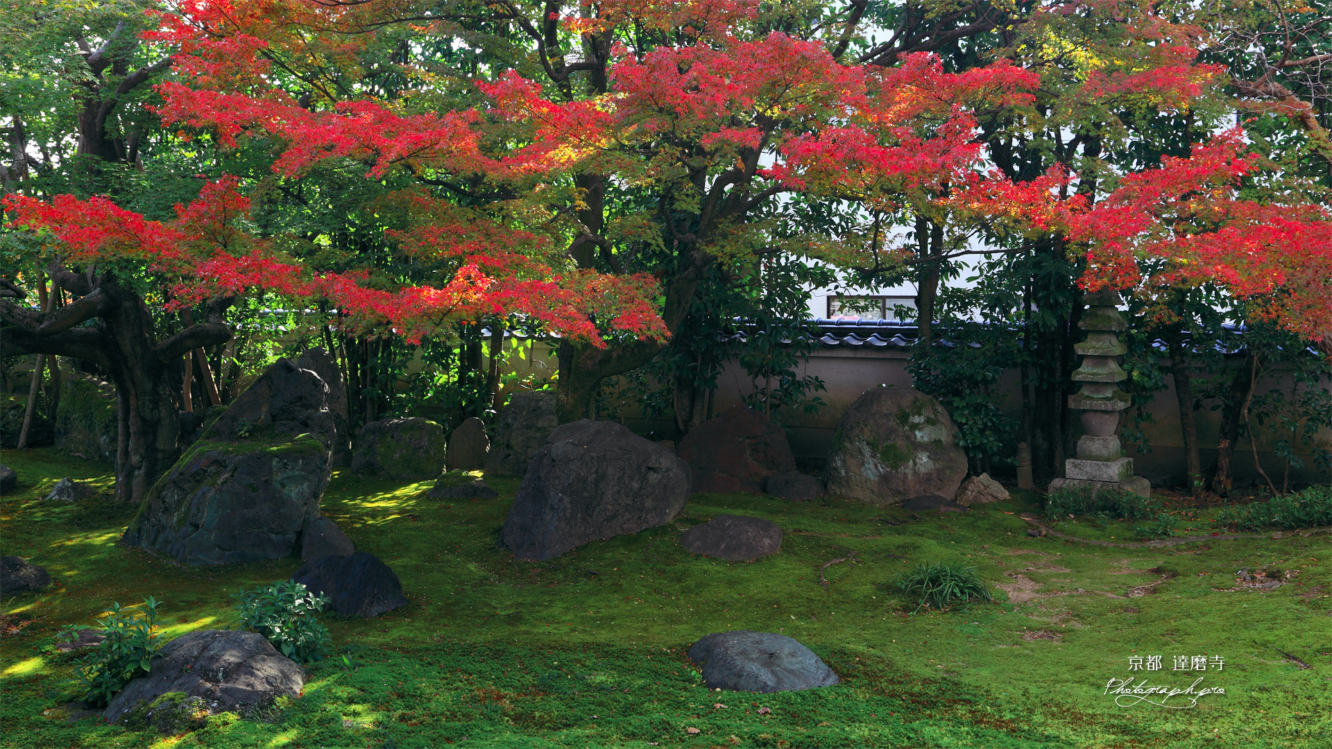 京都達磨寺 無尽庭の紅葉