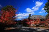 広隆寺 桜紅葉と講堂