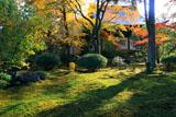広隆寺 本堂裏庭の杉苔と紅葉
