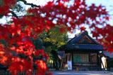 西院春日神社 紅葉越しの能舞台