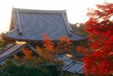 光雲寺 哲学の道から紅葉と仏殿