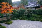 一休寺 紅葉と南庭