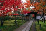 一休寺 参道の紅葉