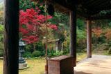 神童寺 本堂からの紅葉