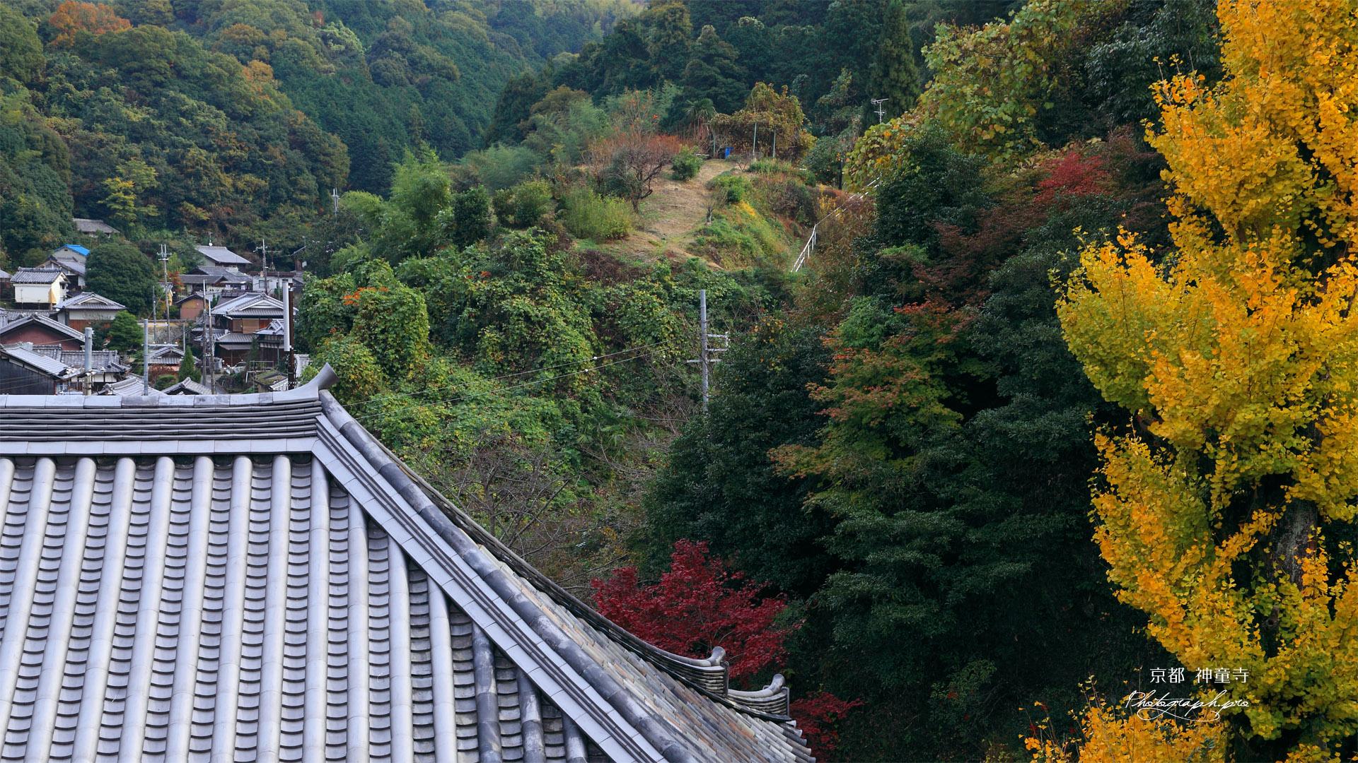 神童寺 本堂と銀杏黄葉