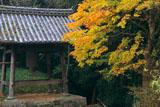 神童寺 鐘楼と紅葉