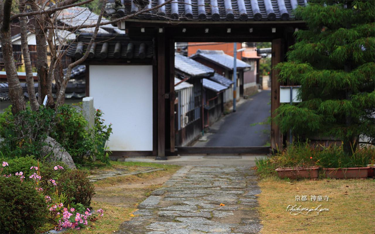 神童寺 山門越しの伊賀街道 壁紙