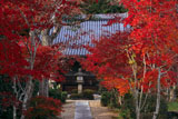 京都観音寺 紅葉と大御堂