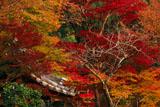 京都地蔵禅院 紅葉と薬医門